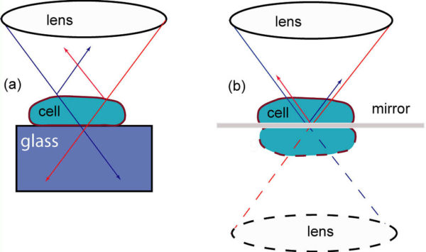 Sketch of the optical rays when cell is (a) attached to the glass substrate or (b) to mirror